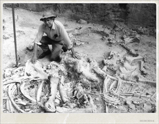 Excavation at the Waco Mammoth Site.
